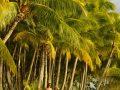 Couple walking on a beach, Bora Bora.